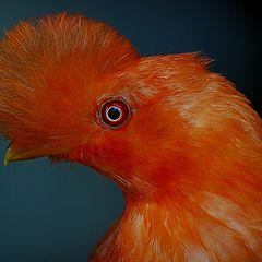 """photo """"Bird 1"""""""