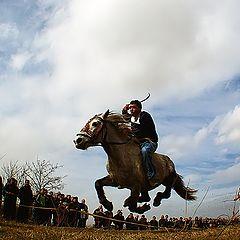 """фото """"Horse"""""""