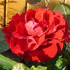 """фото """"Красный цветок"""""""
