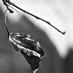 "фото ""Один на весеннем ветру.."""
