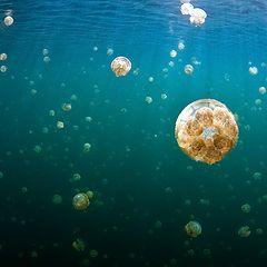 """фото """"Озеро медуз"""""""