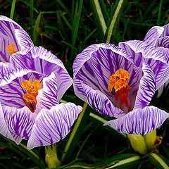 "photo ""Beauty of Spring / Весна красоты"""