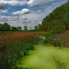 """photo """"Scenic marsh."""""""