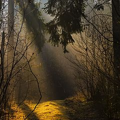 "photo ""Morning light in the forest"""