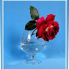 """фото """"Печальная роза"""""""
