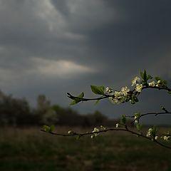"""фото """"Люблю грозу в начале мая..."""""""