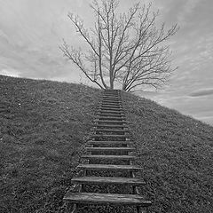 "photo ""Stairs to heaven (or tree)"""