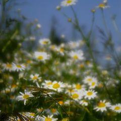 """фото """"Лето - это маленькая жизнь"""""""