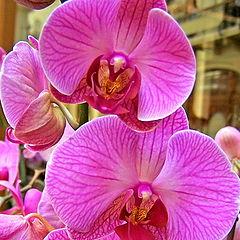 "фото ""Розовая орхидея"""