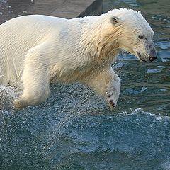 "album ""Novosibirsk zoo"""
