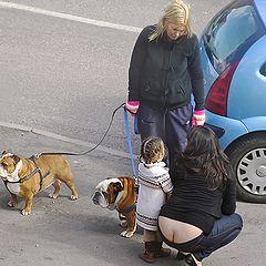 "photo ""English bulldogs."""