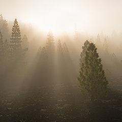 "photo ""Morning rays"""