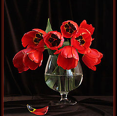"""фото """"Красные тюльпаны."""""""