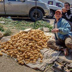 """фото """"Про картошку"""""""
