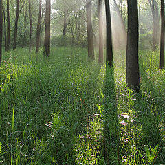"photo ""misty morning in the woods"""