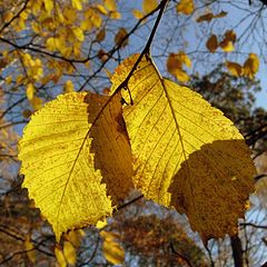 "фото ""Последняя листва..."""