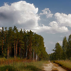 """photo """"Forest road."""""""