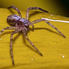 """фото """"Сколько ног у паука?"""""""