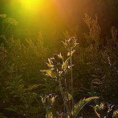 """фото """"волшебный свет"""""""