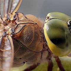 "photo ""макро стрекоза насекомые"""