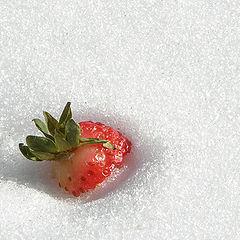 "photo ""Chilled Fruit"""
