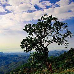 "фото ""Раннее утро во Вьетнаме"""