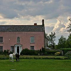 """фото """"Пара лошадей на фоне розового дома."""""""