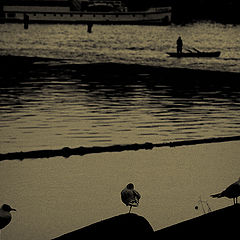 "photo ""Silent night"""