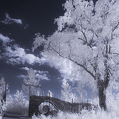 """photo """"White dream"""""""