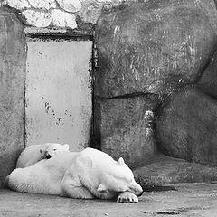"""фото """"bears"""""""