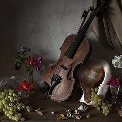 """фото """"Скрипка и раковина"""""""