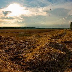 """фото """"Fields Of Gold"""""""