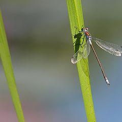 "photo ""Dragonfly"""