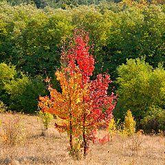 "фото ""Осенние наряды..."""