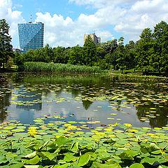 "фото ""Lake with water lilies"""