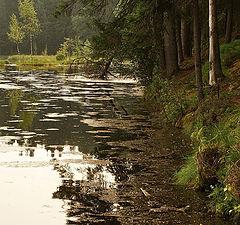 """фото """"заброшенный пруд"""""""