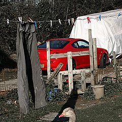 "фото ""Гусь, штаны и красная машина."""