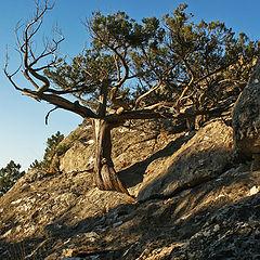 """фото """"И на камнях растут деревья"""""""
