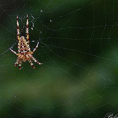 """photo """"Spiders"""""""