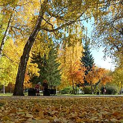 "photo ""Autumn has come"""