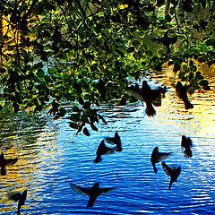 """photo """"autumn bird's dances"""""""
