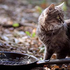 """фото """"кошка рыбака"""""""