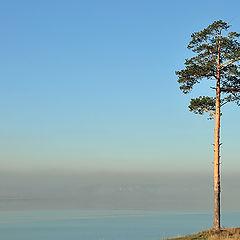 """фото """"Одиночество в тумане"""""""