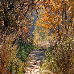 "photo ""Path in the autumn."""