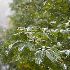 """фото """"Зеленая зима"""""""