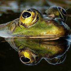 """photo """"Frog 1"""""""