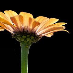 """photo """"Flower 1"""""""