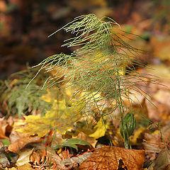 """photo """"Among gold leaf."""""""