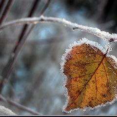 "photo ""Breath of winter"""
