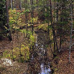 """фото """"Лесной ручей"""""""